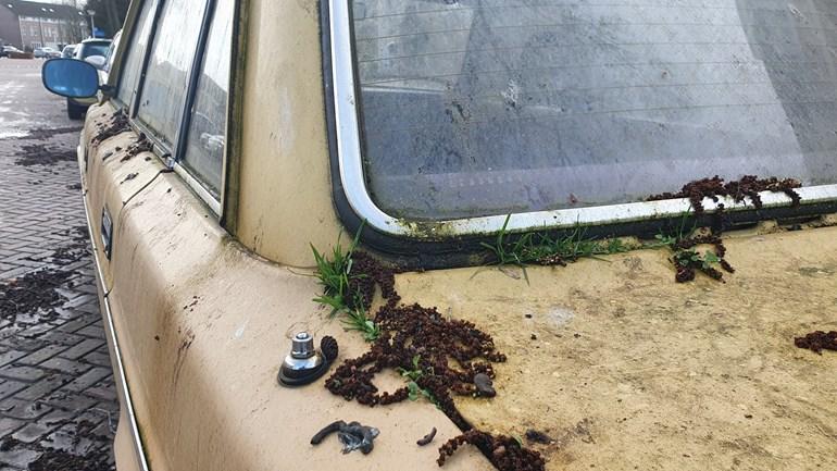 Ook-op-de-kofferbak-en-het-achterraam-van-de-Volvo-heeft-de-natuur-vrij-spel.jpg